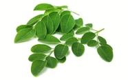 ingredient-moringa-leaves
